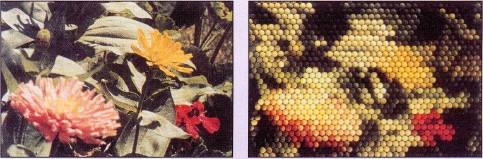 bloemen gezien door bijen
