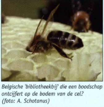 1_bio_de danstaal