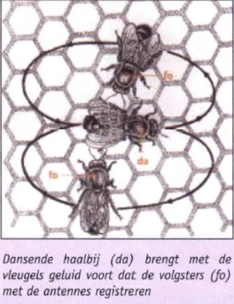 4_bio_kunnen bijen