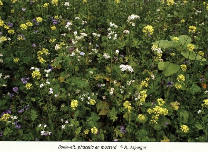 bloemenweide 4