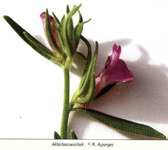 bloemenweide 5